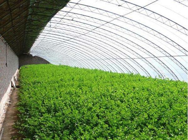 陕西蔬菜温室大棚