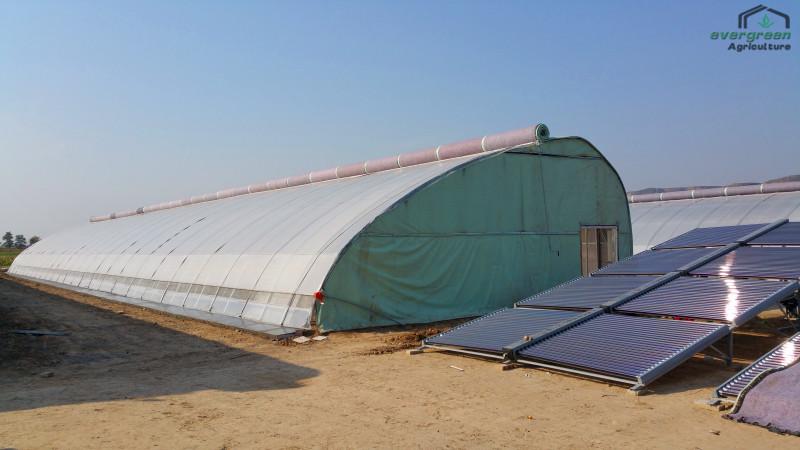 陕西温室-双拱双膜一体保温型日光温室