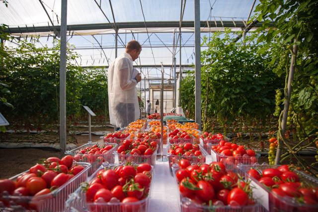 冬季的温室栽培费用是多少