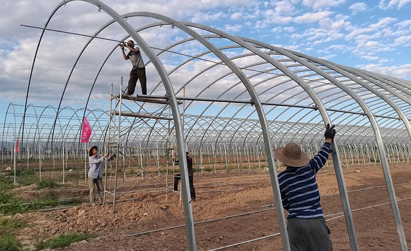 陕西宝鸡保温大棚种植草莓