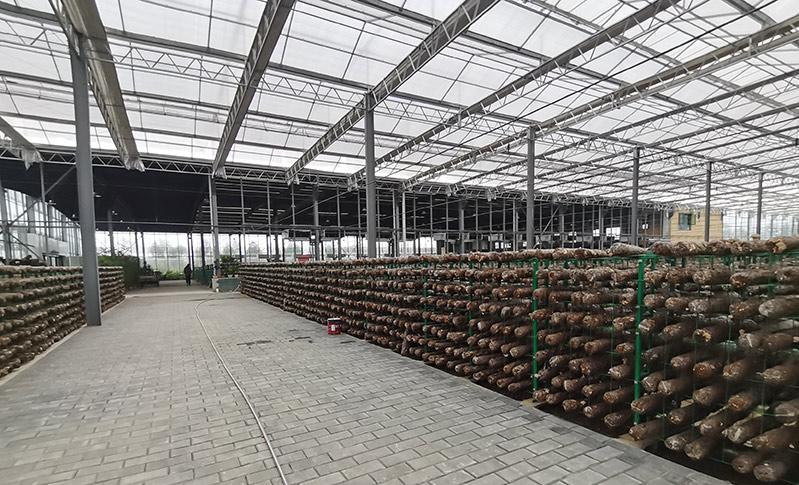 陕西蘑菇温室建设