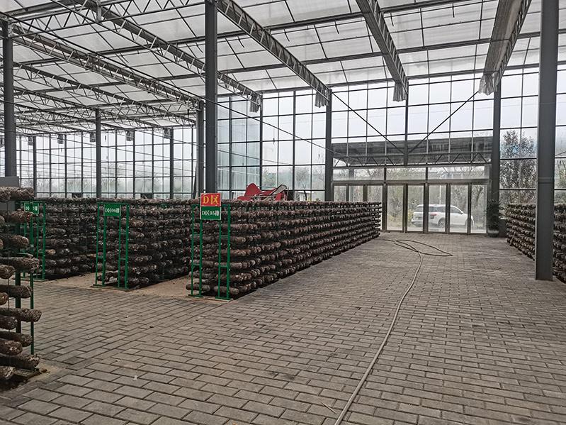 陕西蘑菇菌类温室建设