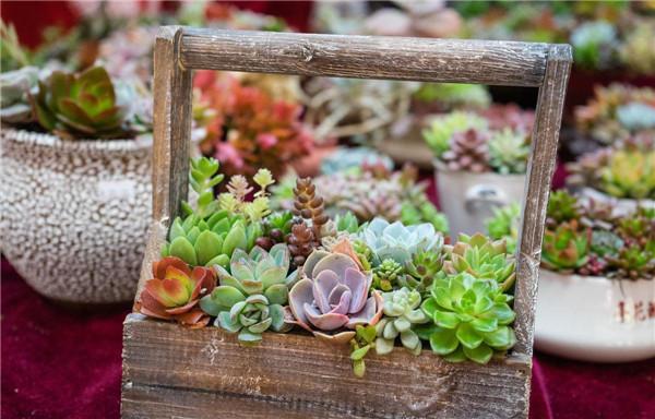 养花应该用什么花盆,那么材质的花盆比较好?
