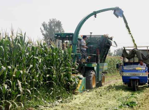 玉米秸秆青储