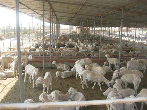 湖北大型养殖场使用花生秧饲料