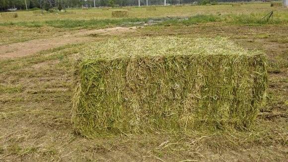 当干花生秧使用秸秆发酵成它还有原有的营养和优点吗?