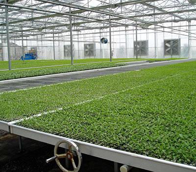 温室可移动苗床规格