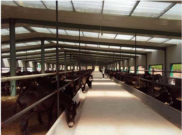 河南驴饲料厂家与东明曹文明肉驴养殖基地