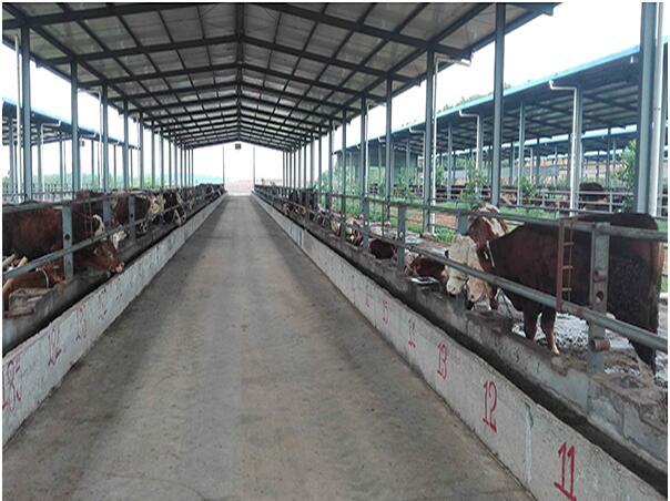 河南牛饲料厂家与阜新市帮牧肉牛养殖场合作案例