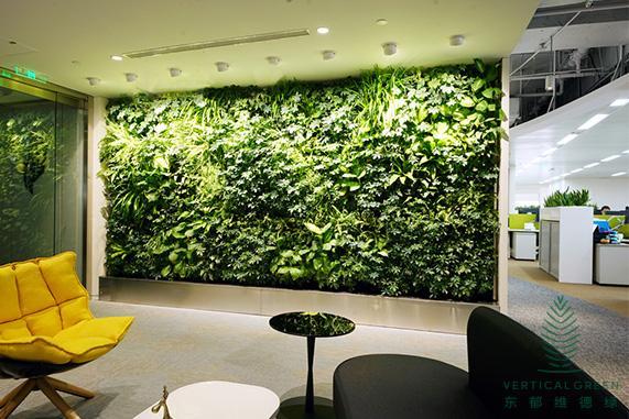 西安仿真植物墙适合生长在光线暗的地方