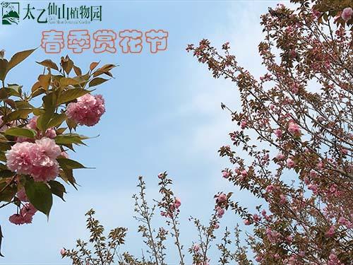 2020太乙仙山植物园春季赏花节