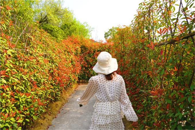 太乙仙山植物园-植物迷宫