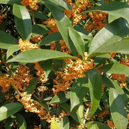 影响绿化苗木移栽成活的因素有哪些?这12个因素缺一不可!