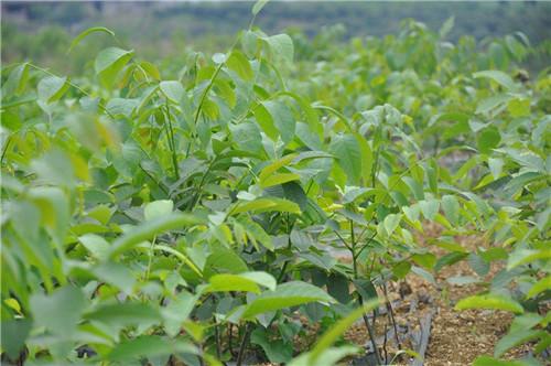 2019年绿化苗木行业的这5大趋势,只有抓住机遇才能获得更多的利润!