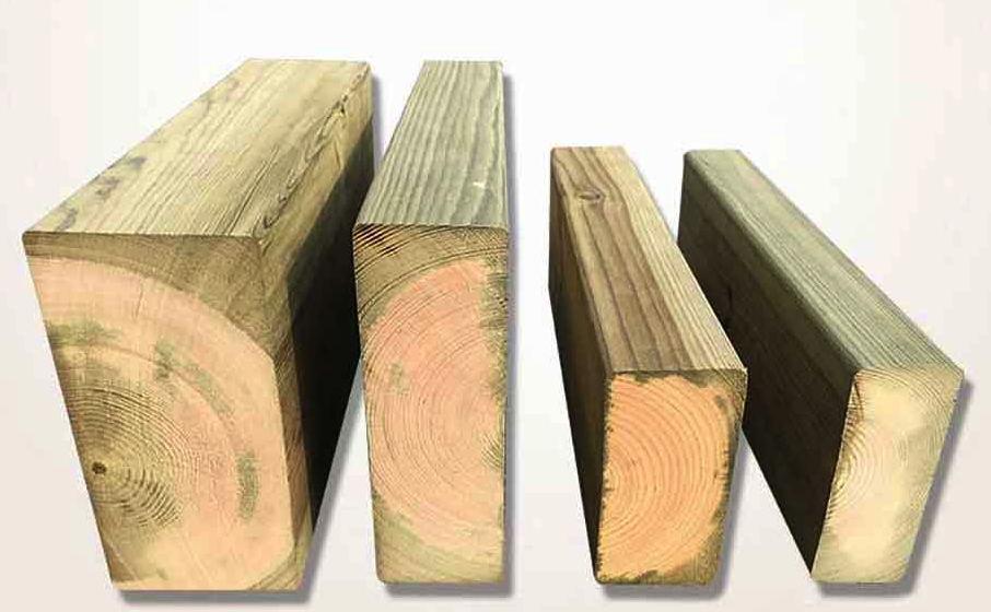成都芬蘭木