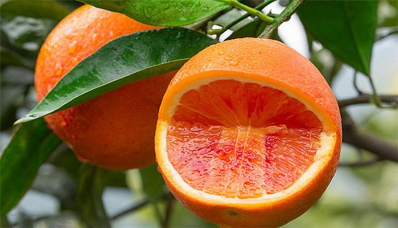 二月红脐橙