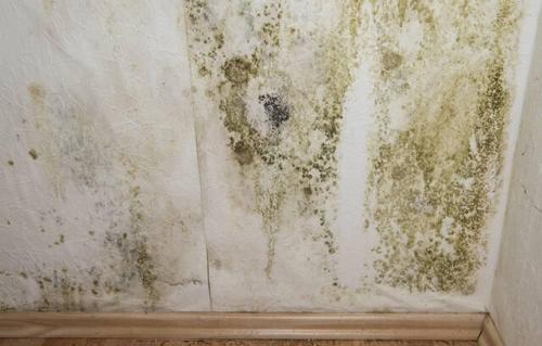 南方家装墙体发霉?四川防霉剂厂家帮您解决