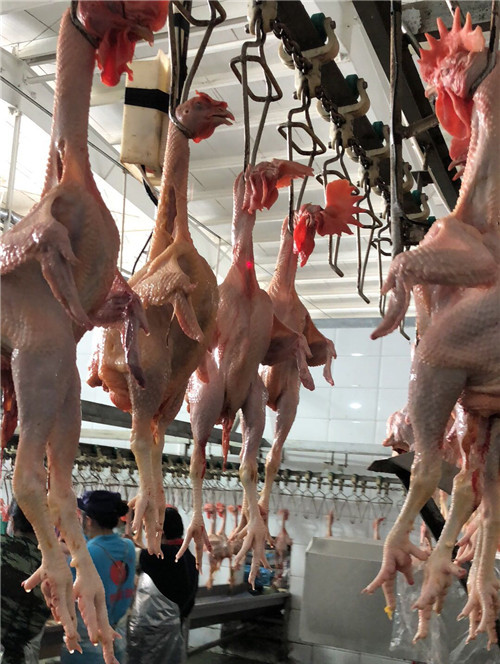 土鸡产品分制
