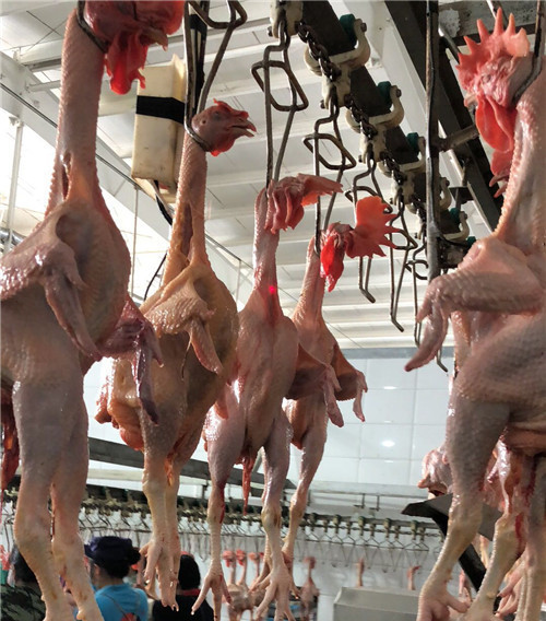 鸡肉分制加工车间