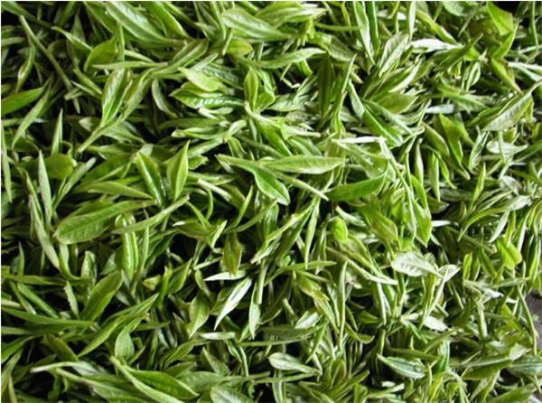 陕西绿茶提取物价格