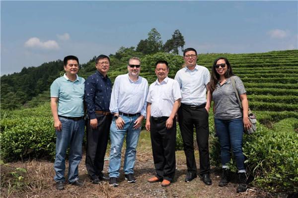 美国客户考察茶叶种植
