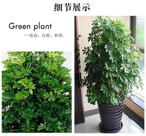 西安绿植租摆案例
