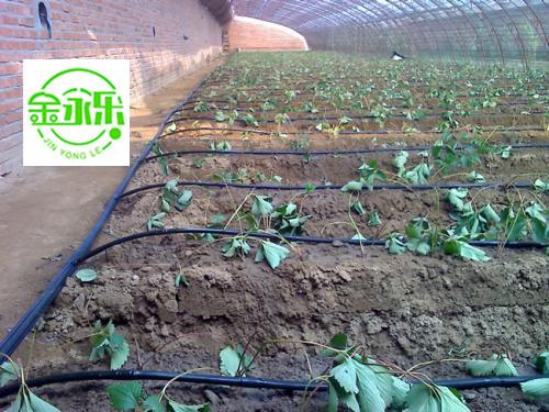 高效节水灌溉项目