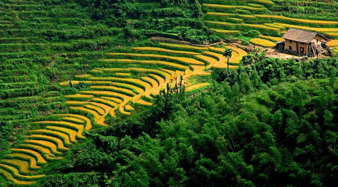 中国农业现代化的十大改进方向