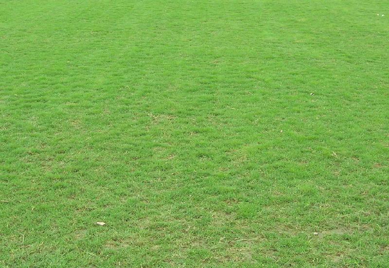 云南台湾二号草坪