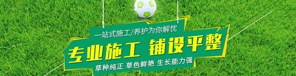 云南绿化草坪生产