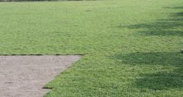 云南马蹄金草坪基地