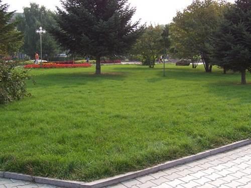 云南混播草坪客户-----合作公园
