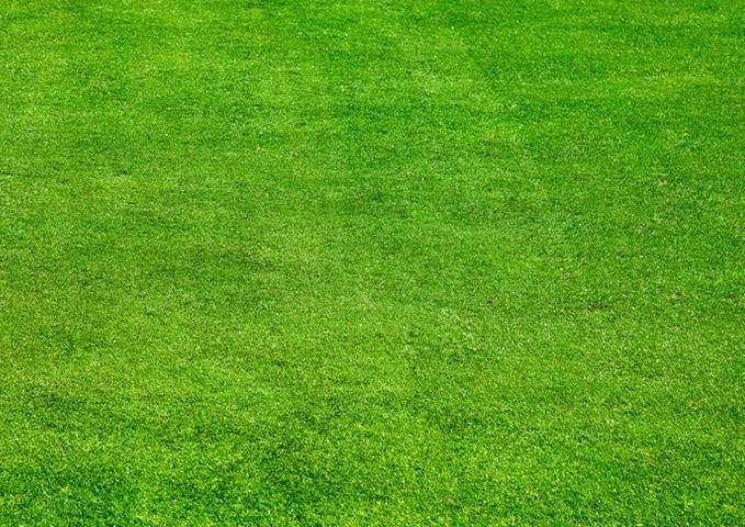 渝宏草业与你分享云南绿化草坪的维护要点