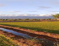 渝宏员工-云南天鹅绒草坪种植案例