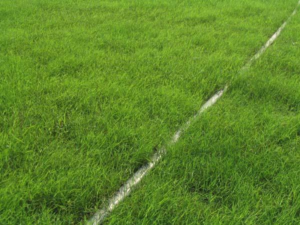 云南混播草坪