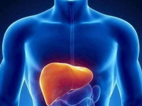 肝脏部位图解