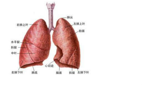 南充肺功能体检
