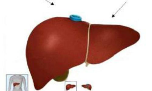 肝功能体检注意事项