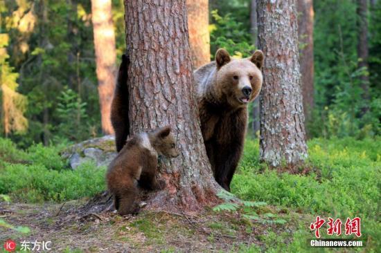"""思维敏捷!女子建议助力男友逃脱母熊""""魔掌"""""""