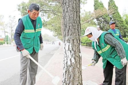 树木涂白 防治虫害