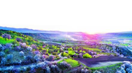 【新疆是个好地方】从春天出发共赴花之约