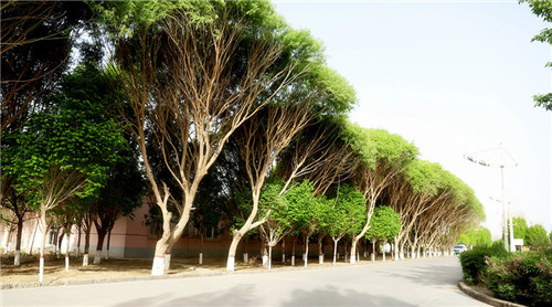 植树造林数载,绿色在沙漠腹地延伸