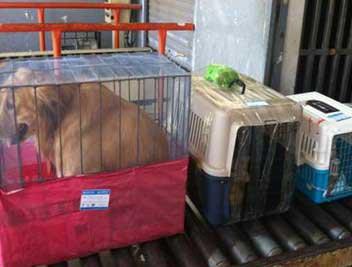 四川航空寵物托運
