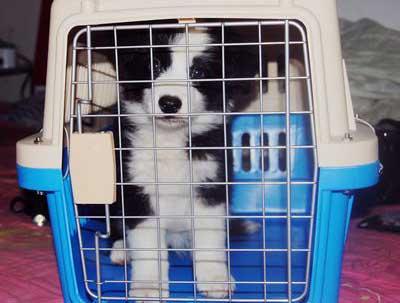 綿陽航空寵物托運