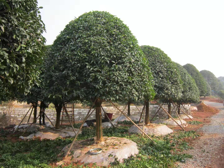 陕西绿化工程