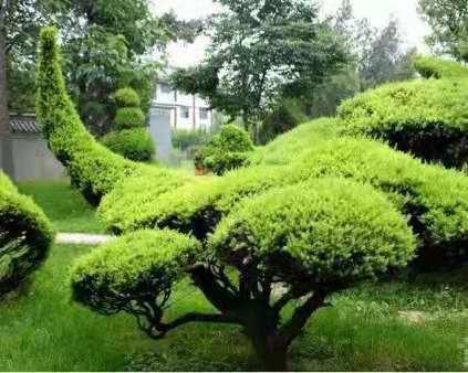 园林绿化养护工程