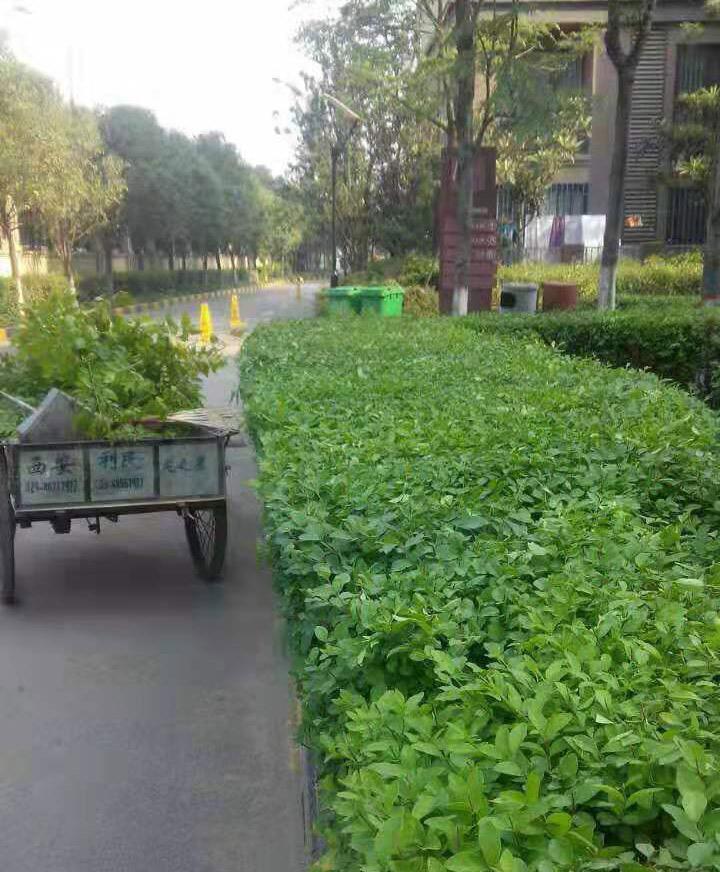 陕西园林养护施工案例