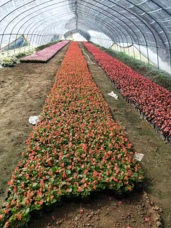 万佳园林花卉基地
