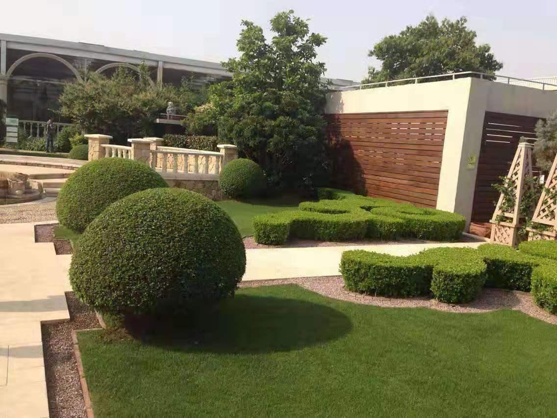 陕西园林绿化苗木展示