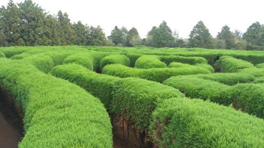 陕西园林绿化
